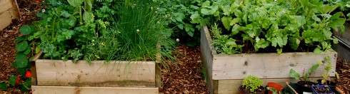 no-dig raised beds