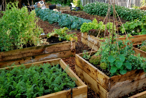 grow your own boxes