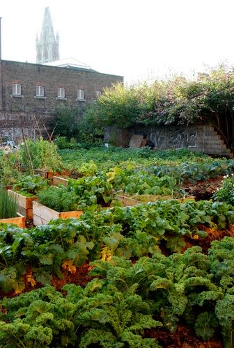 Secret Urban Organic Farm